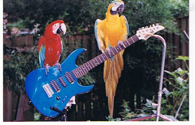 Birds Rockin'